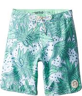O'Neill Kids - Santa Cruz Original Scallop Print (Big Kids)