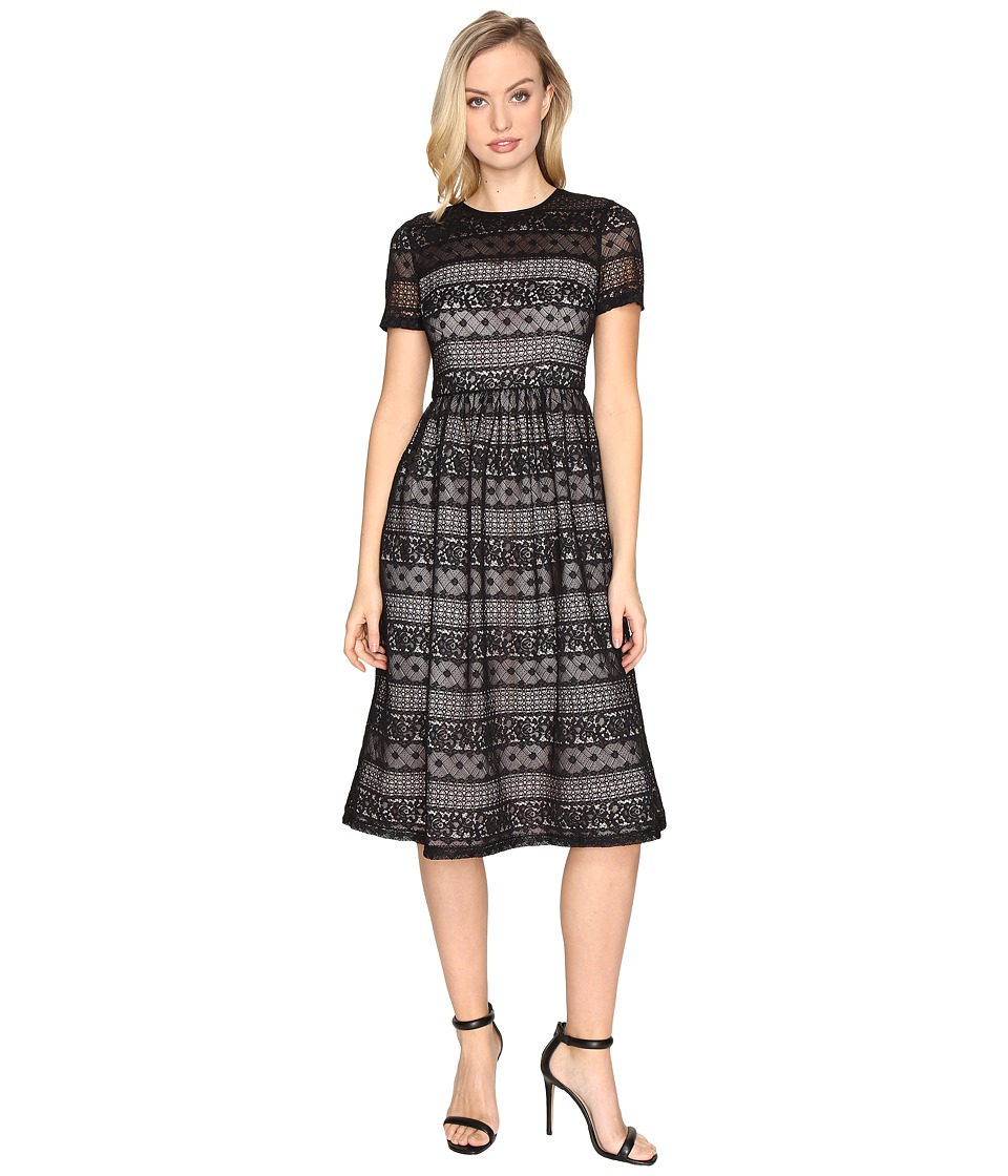 Maggy London Victorian Stripe Lace Fit and Flare (Black) Women