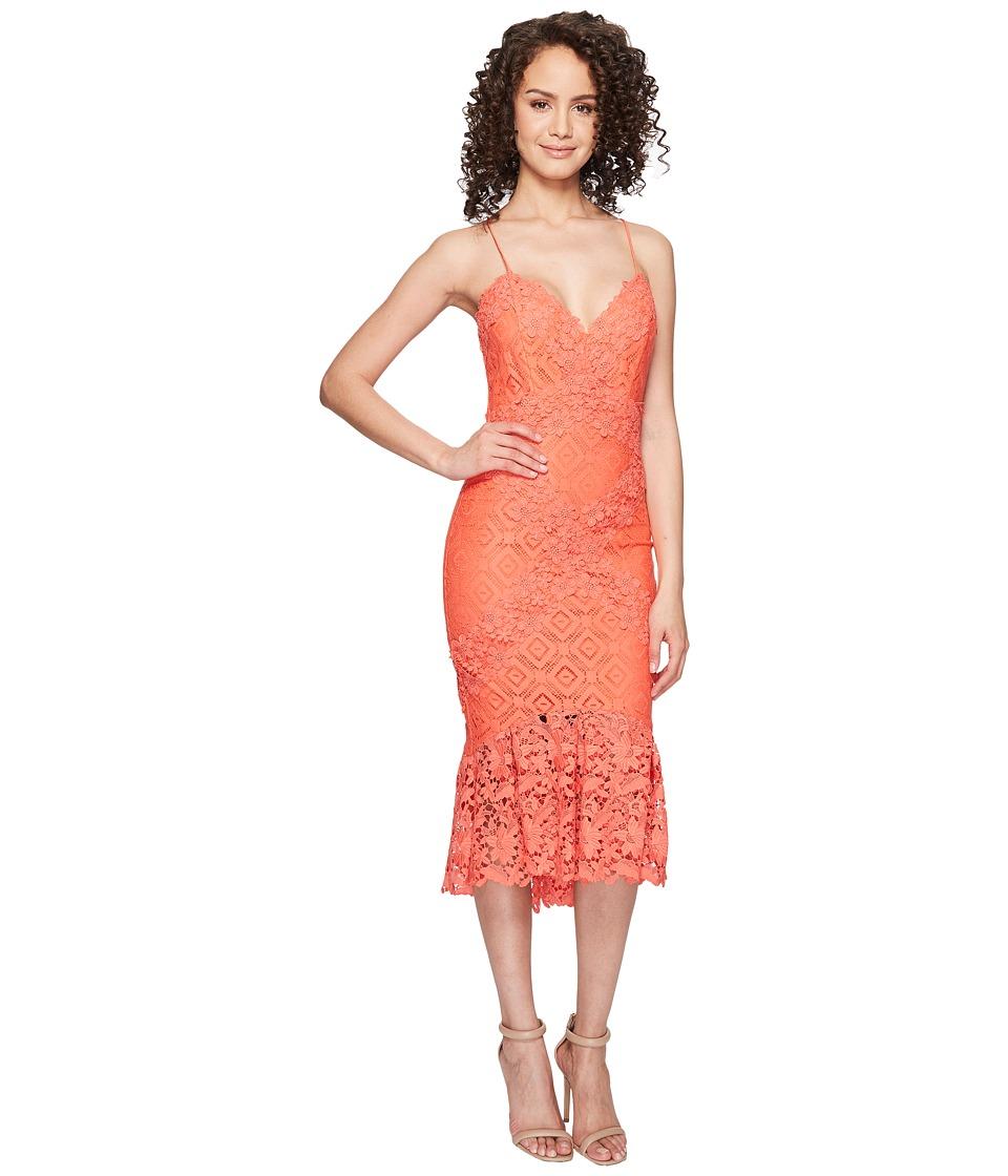 Nicole Miller Leila Crochet Lace Cocktail Dress (Coral Reef) Women